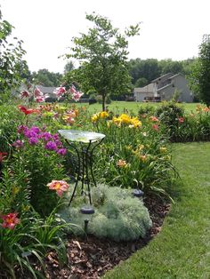 8 Things You Should Do In Your Daylily Garden NOW! a young lady and her garden Landscape Design, Garden Design, Daylily Garden, Sun Perennials, Garden Bulbs, Garden Borders, Garden Care, Day Lilies, Yard Landscaping