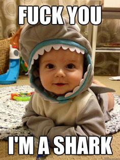 fuck you im a shark -