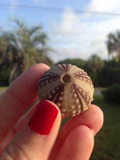 Found on IOP Charleston, South Carolina | Isle of Palms Beach