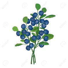 Blueberry illustration Blueberry Tree, Blueberry Bushes, Tree Illustration, Botanical Illustration, Illustrations, Nc Tattoo, Tattoos, Sloe Berries, Christmas Tree Inspiration