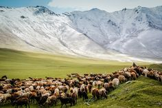 Best of photos Kyrgyzstan - Nomad 2