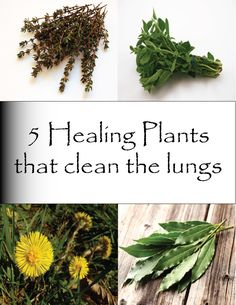 Healing Plants that cleans the lungs - 5 plants
