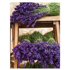 Schilderij canvas Lavendel op tafel 29x22 cm | goedkoop kopen € 2,50 | Schilderijen | Wonen | Online Winkel | Discount Postorder Warenhuis Budgetland