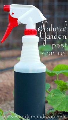 My Natural Garden Pest Control - I\'m proud to announce that my fall garden is goin\' strong, thanks to my natural garden pest control! I\'ve got my soil composted, organic heirloom seeds planted, labels painted,