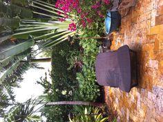 yard decks yards forward bougainvillea on tanning deck in back yard