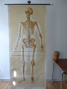 5 day delivery worldwide - Original (75') Skeleton Pull Down Chart - Extra Large Medical School Chart - Germany 1951