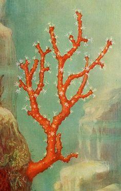 Ocean coral.