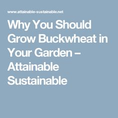 Why You Should Grow Buckwheat in Your Garden – Attainable Sustainable