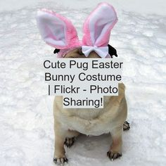 Cute Pug Easter Bunny Costume | Flickr - Photo Sharing! Cute Baby Cats, Cute Cats And Dogs, Cute Pugs, Cute Puppies, Funny Babies, Cute Babies, Easter Bunny Costume, Cute Baby Videos, Samoyed Dogs