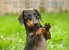 squirrel-story by Crusoe the Celebrity Dachshund, via Flickr