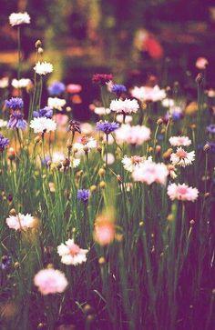 Paleta de Colores inspirada en flores silvestres, por Kind of Pretty Pretty Flowers, Wild Flowers, Flowers Nature, Summer Flowers, Meadow Flowers, Spring Wildflowers, Fresh Flowers, Field Of Flowers, Happy Flowers