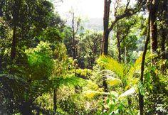 tropische regen woud