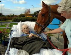 Dying cancer patient's last wish to see his horse one more time was granted when the animal was brought to hospital