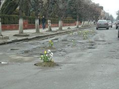 somewhere in Germany - April is the cruellest month: breeding flowers out of the dead tarmac...