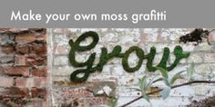 How to make your own moss graffiti (RECIPE)