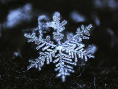 """the origins of snowflake as a slang term - Missouri anti-abolitionists of slavery; Chuck Plahniuk's book Fight Club where a character says """"You are not a beautiful and unique snowflake. You are the same decaying organic matter as everyone, and we are all part of the same compost pile."""""""
