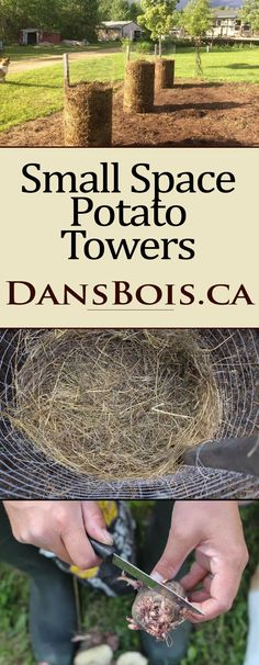 Potato Towers – Wilderstead This simple method of growing potatoes in small spaces can yield huge crops. Each tower is capable of producing well over 100 pounds of spuds! Potato Gardening, Organic Gardening, Urban Gardening, Desert Gardening, Sustainable Gardening, Permaculture, Gardening For Beginners, Gardening Tips, Flower Gardening
