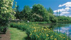 photos jardins fleurs - Recherche Google