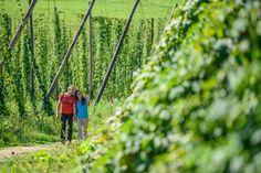 Vineyard, Outdoor, Brewery, Beer, Hiking, World, Outdoors, Vine Yard, Vineyard Vines