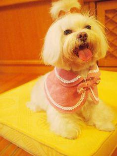 Small dog puppy clothes Reversible pet cape by CorgiKuriandFriends, $24.00
