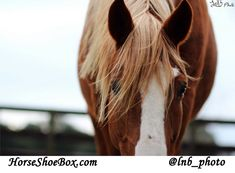 What product would you like to see in your next Horse Shoe Box?  Photo Credit: www.instagram.com/lnb_photo
