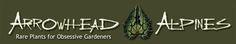 arrowhead alpines plants