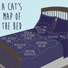 #map #bed #cat