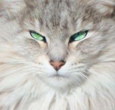 Soft kitty, warm kitty, little ball of fur. . .