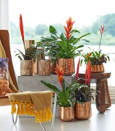 Bromeliad is the family name. Guzmania, Vriesea and Tillandsia are names of varieties within the family. Aechmea and Ananas (Pineapple) also belong to this family.
