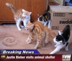 Justin Bieber Visits Animal Shelter,  Click the link to view today's funniest pictures!