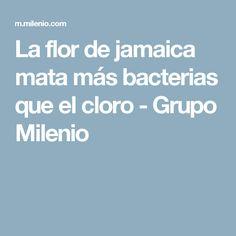 La flor de jamaica mata más bacterias que el cloro - Grupo Milenio
