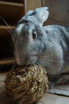 Hay balls and chew toys are very important to rabbit's dental health.