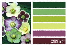 #patternpod #color #green #purple #flowers