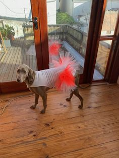Gangster Diva Elsa I love to wear all my beautiful dresses and show them around in our hood. They call me also Gangster Diva, I don't know why? New Sibling, Weimaraner, Beautiful Dresses, Elsa, Dogs, Fun, Animals, Cute Dresses, Animales
