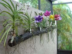 How To Keep Orchids Alive And Looking Gorgeous Florida Plants, Florida Gardening, Vanda Orchids, Orchids Garden, Orchid Planters, Orchid House, Growing Orchids, Orchid Arrangements, Orchid Care