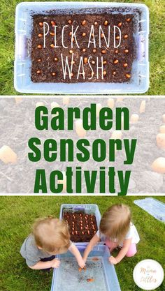 An easy sensory activity for toddlers to pick and wash their own carrots from the garden.