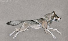 Wolf_Running_by_lioncrusher.jpg (761×460)