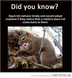 I like squirrels