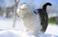 cute cat, uroczy, zwierzę, biały, śnieg, kręcąc się, fotografia, rozmycie