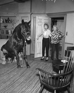 I Love Lucy: with a horse in a house.