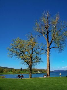 """The sky is never so blue as it is on enchanting Otsego Lake, Cooperstown, NY. """"i thank You God for most this amazing day: for the leaping greenly spirits of trees and a blue true dream of sky; and for everything which is natural which is infinite which is yes..."""" e.e. cummings Otsego Lake, Thank You God, East Coast, Infinite, New England, Beautiful Places, To Go, Traveling, Trees"""