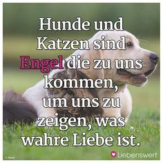 Hunde und Katzen sind Engel die zu uns kommen, um uns zu zeigen, was wahre Liebe ist. Animals Beautiful, Cute Animals, What's True Love, I Love You Quotes For Him, Angry Cat, Cat Quotes, Dog Agility, Dog Training Tips, New Tricks