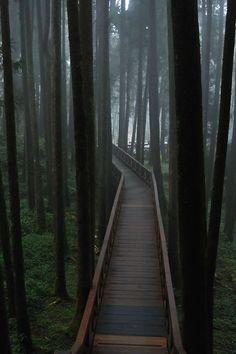 Forest Bridge, Taiwan