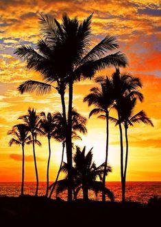 Beautiful Sunset at beach w palm trees Beautiful World, Beautiful Places, Beautiful Nature Scenes, Beautiful Castles, Beautiful Scenery, Foto Picture, Foto Poster, Amazing Sunsets, Beautiful Sunrise