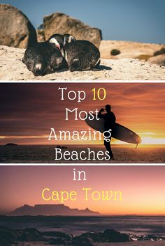 We did the research so you don't have to. Find the top 10 most amazing beaches in Cape Town all together on this board. Next step, buy your ticket to travel Cape Town.