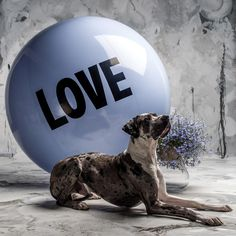 5 foot tall Big Love Ball $79. Make an instant impact at your wedding, fundraiser or photoshoot. Send a LOVE Bomb to someone you love today!