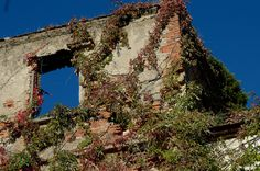 Risultati immagini per luoghi abbandonati Grand Canyon, Abandoned, Cabin, House Styles, Nature, Travel, Abandoned Homes, Ruins, Castles