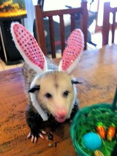 Happy Easter and Holidays to All from The Easter Opossum!!