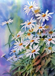 Watercolour 30×23cm W and N artists on Arches 140lb cold press paper. / I found this painting unfinished this morning while looking through my back work. Decided to have another go at it and it has made the day a bit brighter. / Daisies are the simplest of flowers and all the more pleasing for being so. They always make me think of sunshine. • Buy this artwork on home decor, stationery, bags, and more.