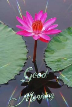 Good Morning Wishes Gif, Good Morning Friends Images, Good Morning Beautiful Pictures, Good Morning Beautiful Flowers, Good Night Love Images, Good Morning Cards, Good Morning Images Download, Beautiful Images Of Flowers, Cute Love Images